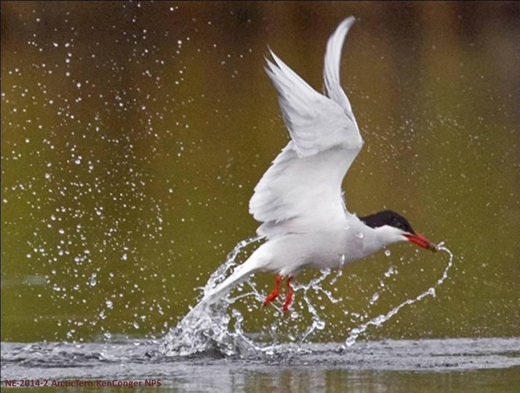 هل الطائر الذي يصلُ أبكر يُكافأ أفضل؟ أم أن للتغير المناخي رأيٌ آخر؟