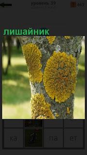 1100 слов на дереве растет лишайник, покрывая его всего 39 уровень