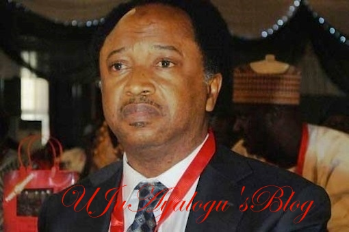 Consult your home oracles for miracles, Nigerian does not have enough – Shehu Sani tells Liberian President