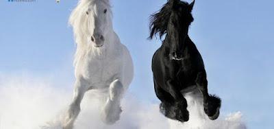 أحدث صور الخيول بيضاء وسوداء 2018