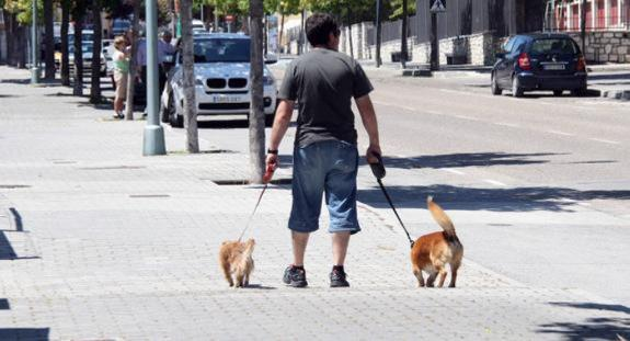 Benalmádena orders pet owners to clean up their dogs' urine with soap or vinegar