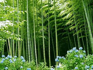 Belajar Dari Bambu