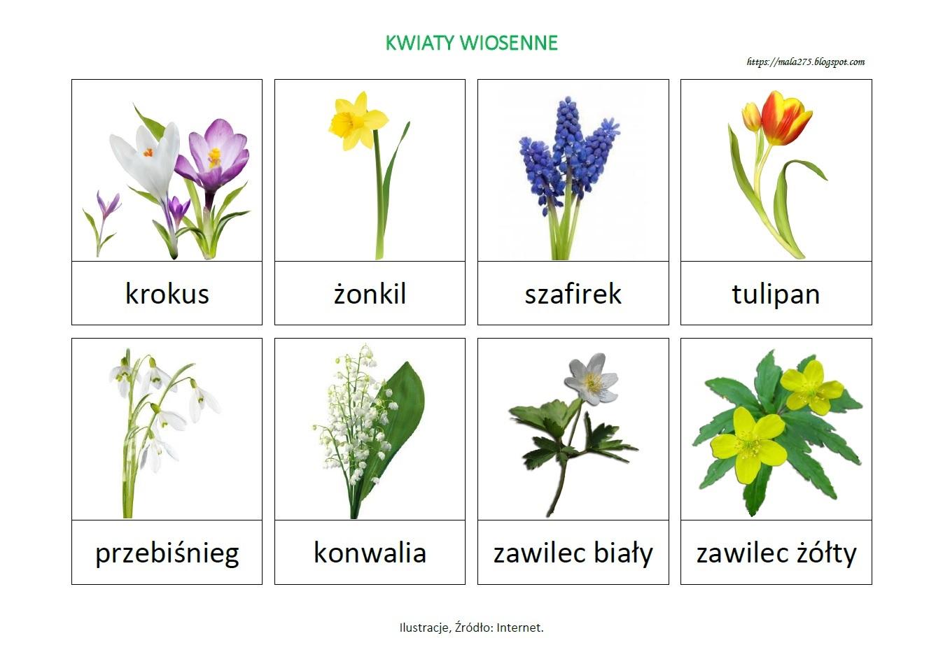 Blog Edukacyjny Dla Dzieci Kwiaty Wiosenne Plansza