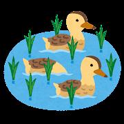 合鴨農法のイラスト
