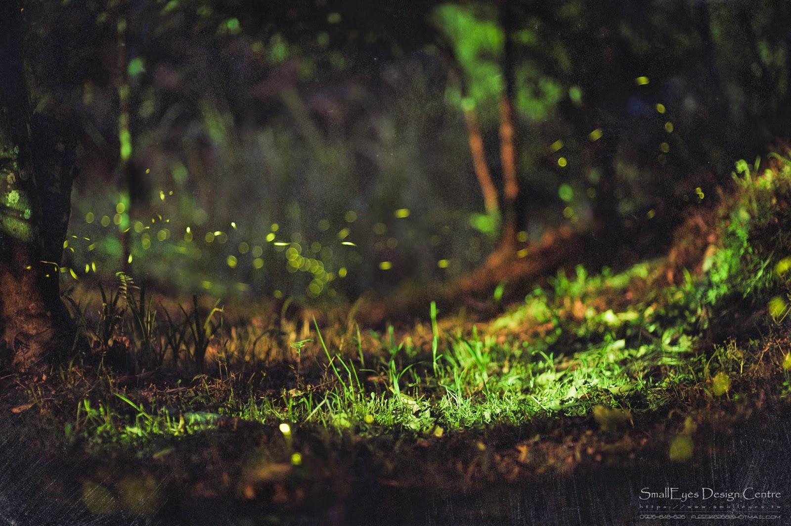 【攝影教學】螢火蟲/拍攝教學文 - 小眼攝影