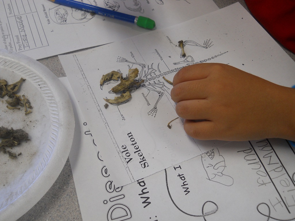 Mrs Johnson S First Grade Fun With Owl Pellets