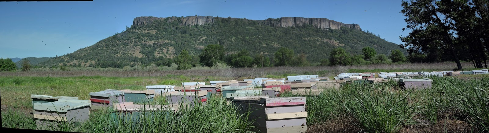 The Amateur Anthecologist Apiaries 1-3914
