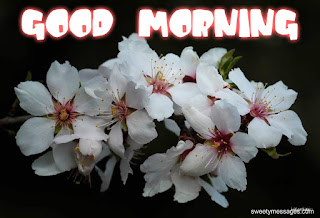 good morning mesages on flowers