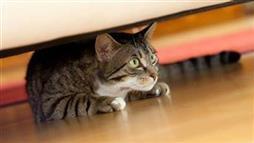 Del coágulo de gato pata delantera en la sangre
