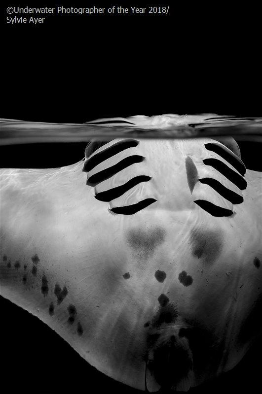 concurso-fotografía-submarina-2018-ganadores