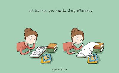 Ders-Çalışan-Kedi