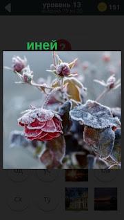 иней покрыл цветы на 13 уровне в игре 470 слов