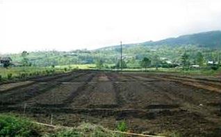 Lahan tempat menanam bawang merah