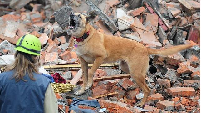 ¿Pueden los animales predecir un terremoto?