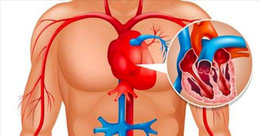 Votre corps vous prévient un mois avant d'avoir une crise cardiaque - Voilà le secret caché que tout le monde doit connaitre