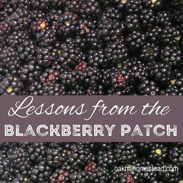 Rules for life, learned in the blackberry patch.