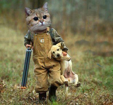 Cat and dog jjbjorkman.blogspot.com