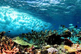 Coral reef 11