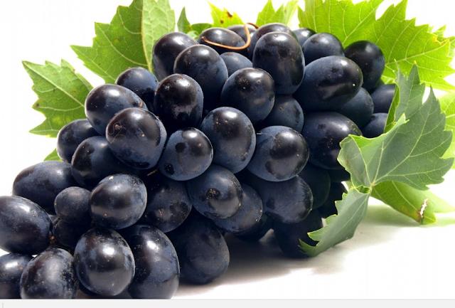 Buah Anggur (Vitis vinivera)