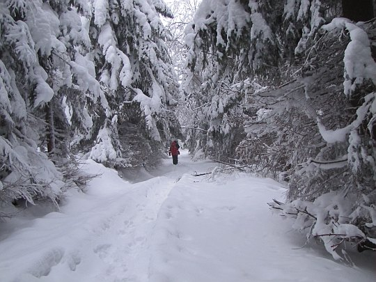 Leśna ścieżka przed rozstajem pod Małym Stożkiem.