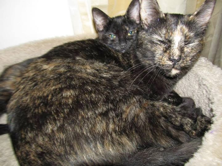 Alley Cats And Angels Of Nc Knightdale Petsmart Adoption