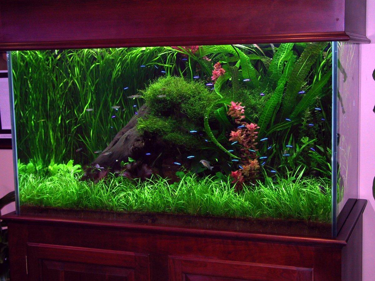 Les id es d co id es d co aquarium for Deco aquarium eau douce