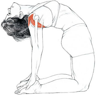 ustrasana asana,camel pose,yoga asana for cervical pain
