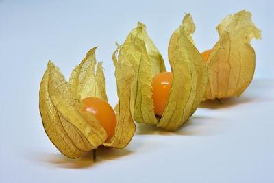 manfaat-buah-ciplukan-bagi-kesehatan,www.healthnote25.com