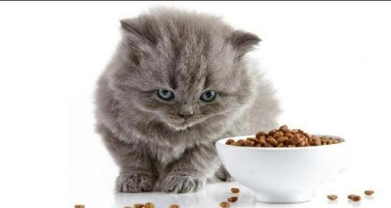 Cara agar kucing mau makan