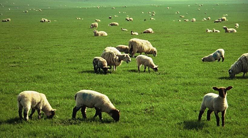 Ομάδα Παραγωγών για την αξιοποίηση του γάλακτος συστήνουν οι κτηνοτρόφοι του Τυρνάβου