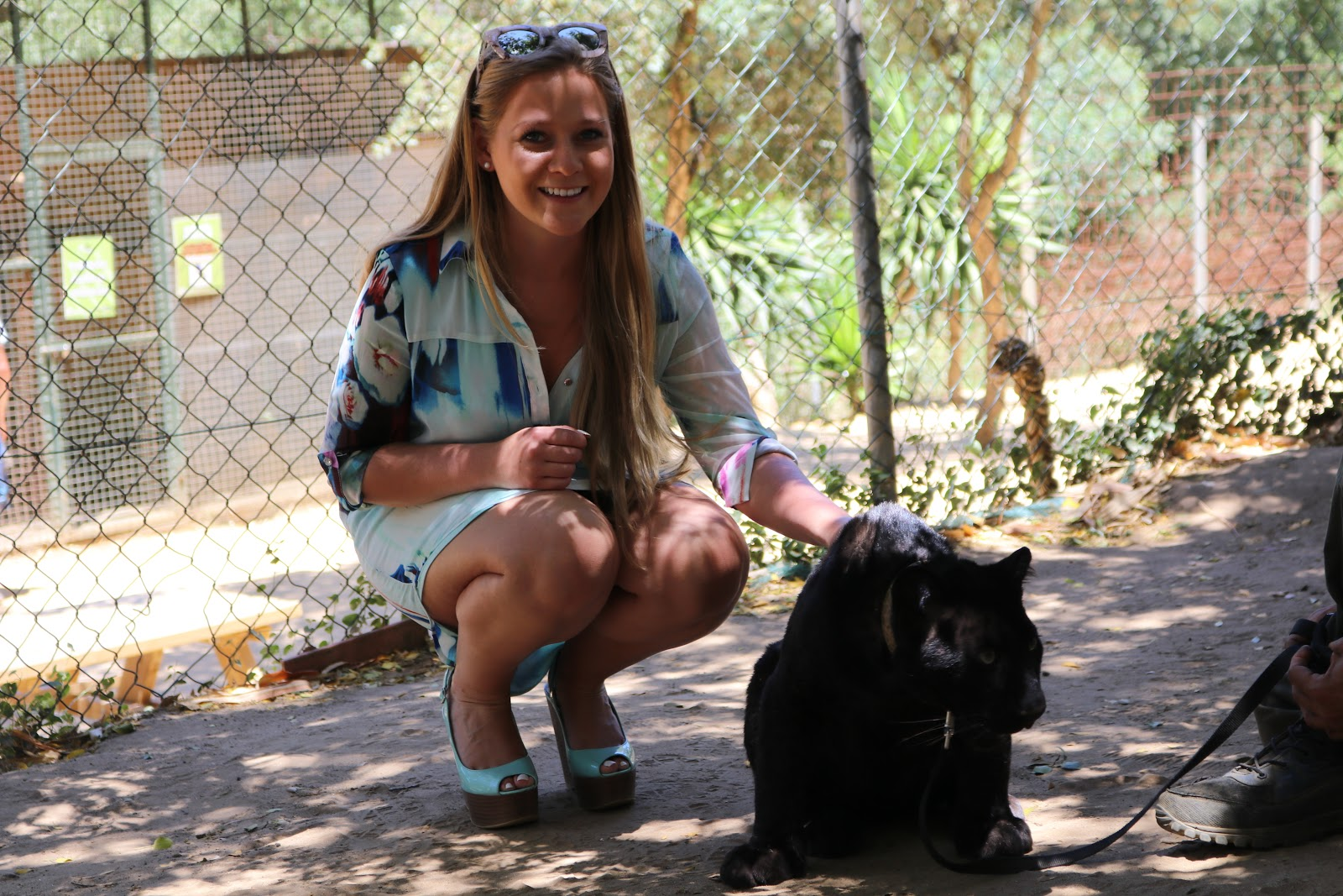 Blonde Girl, Katie Heath, wearing a Quiz Blue shirt dress with a panther in zoo de Castellar, Spain