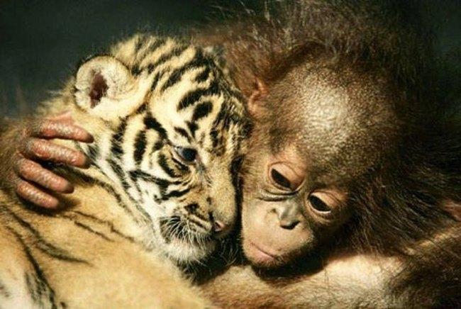 ζώα αγάπη