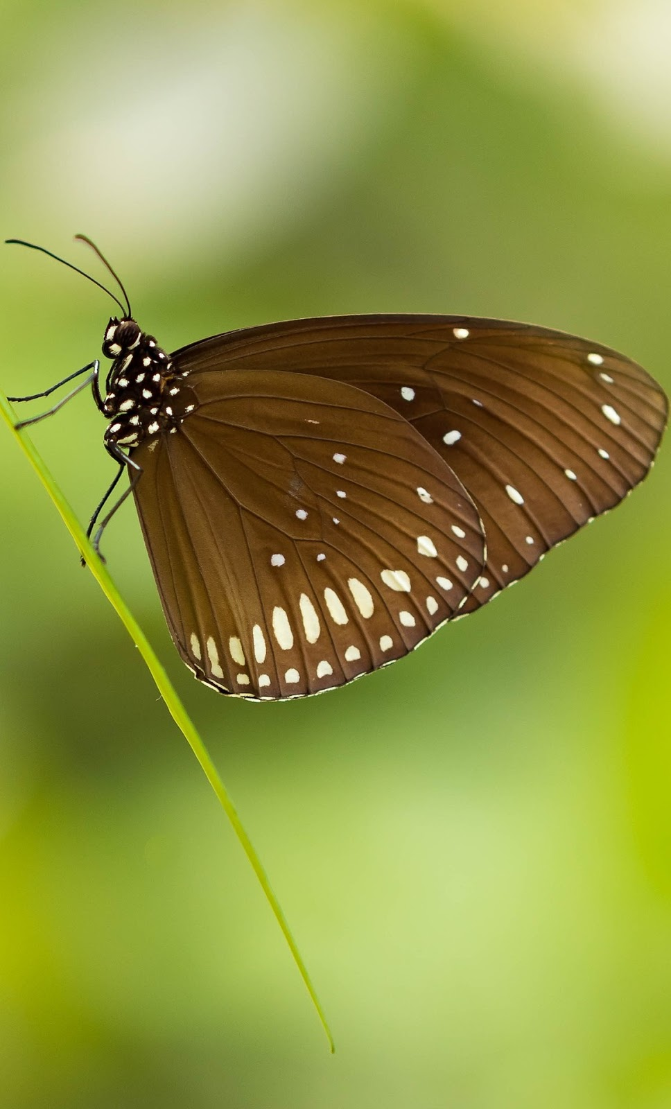 A brown butterfly.