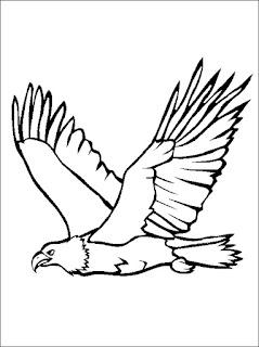 Adler Malvorlage