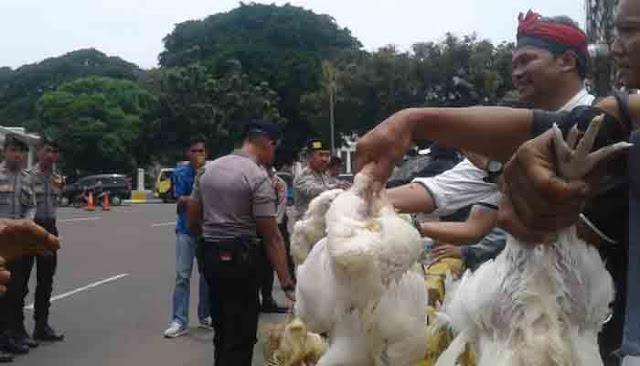 Harga Jatuh, Peternak Demo Lepasin Ayam di Depan Istana Jokowi