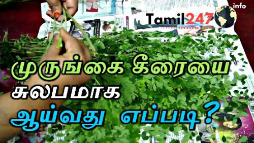 முருங்கை கீரையை சுலபமாக  ஆயலாம். விரைவாக முருங்கை கீரை பறிப்பது எப்படி ? murungai keerai parippadu eppadi tips and tricks in tamil. how to clean and how to remove drumstick leaves,  Pick and Clean Moringa Leaves