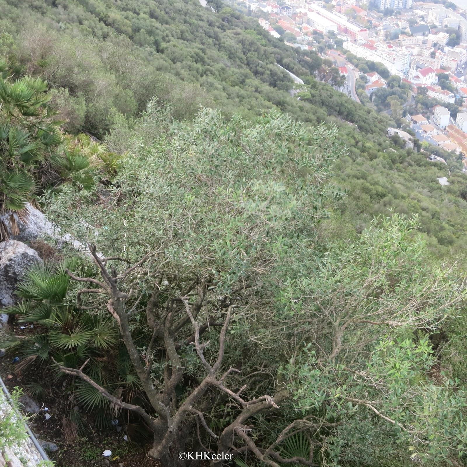 hillside, Gibraltar