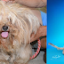 These 10 Incredible Transformations Show How Grooming Helps Dogs Get Adopted