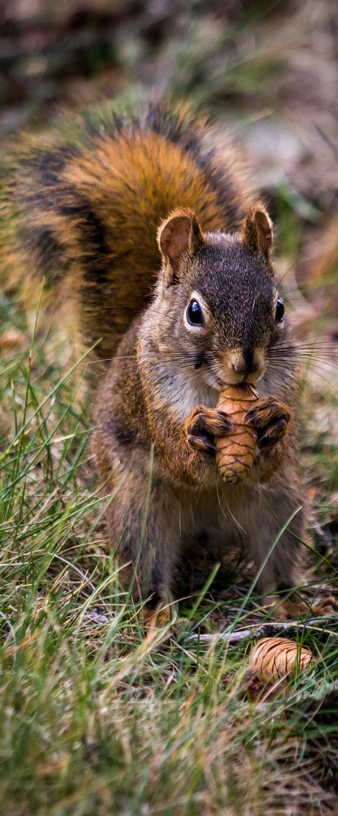 Picture of a squirrel eating.