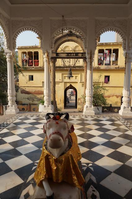 Sapi, Hewan yang disucikan di India