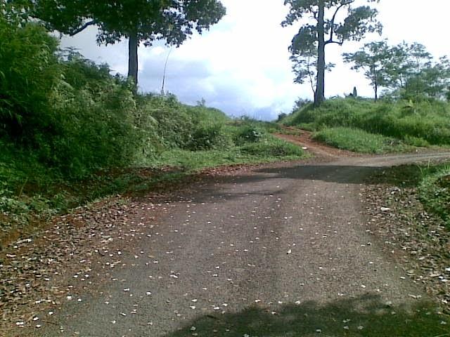 Foto(5374) Jual Tanah Murah Luas 130 Ha, Harga 50.000 Di Puncak Jual tanah di cipanas jual tanah di puncak