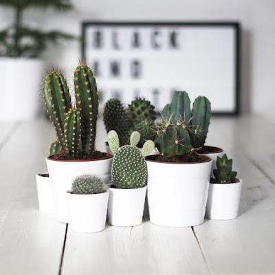 Ultimissime dall 39 orto arredare casa con le piante - Arredare casa con le piante ...