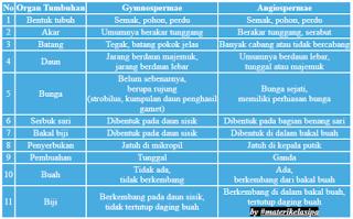Ciri dan Perbedaan Gymnospermae dan Angiospermae