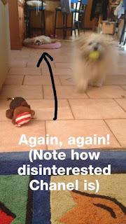 Please Throw My Ball Again