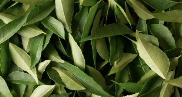 curry leaves benefits click here