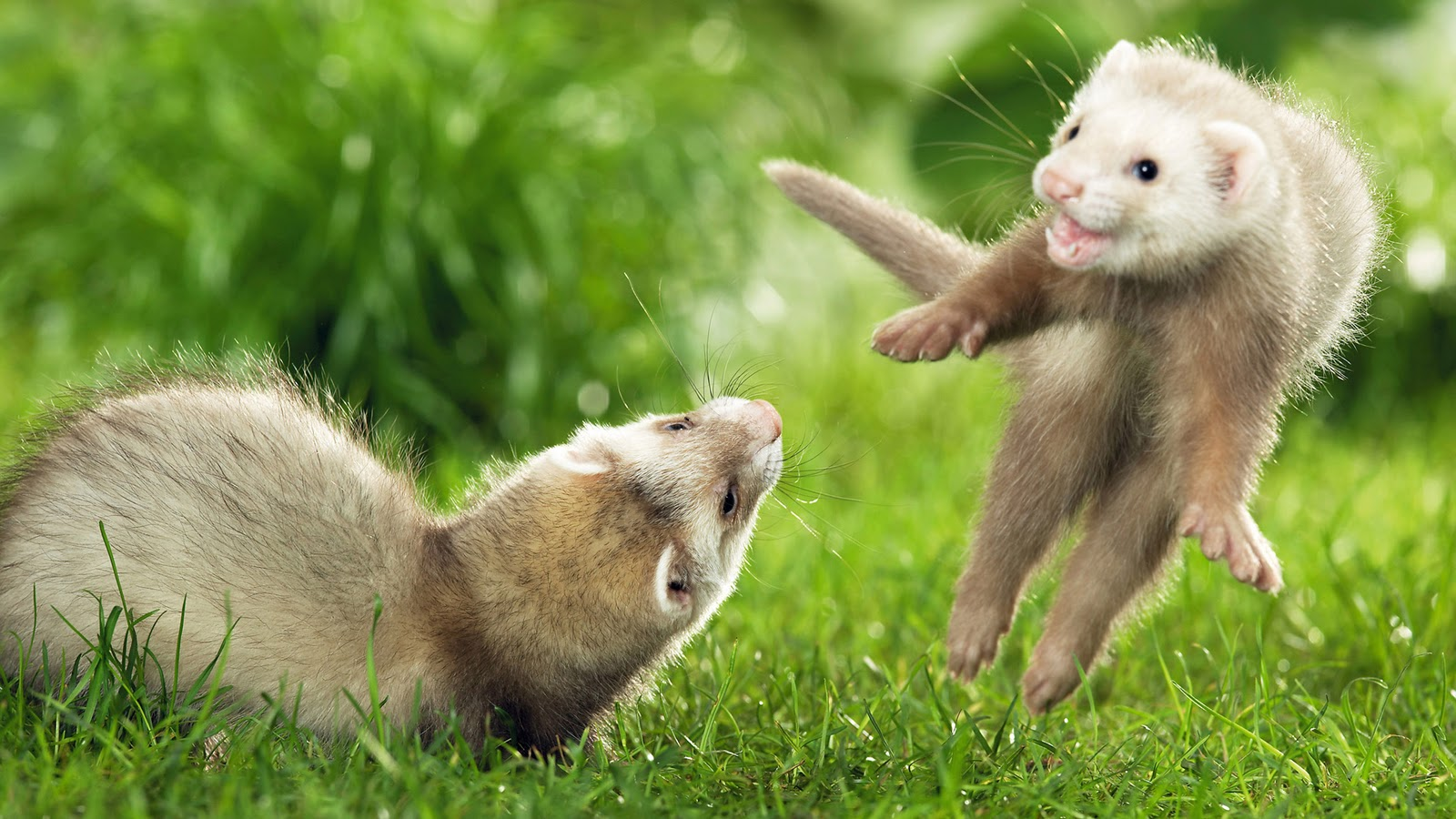 Photography nature world people beauty cute animals hd - Animal pictures for desktop backgrounds ...