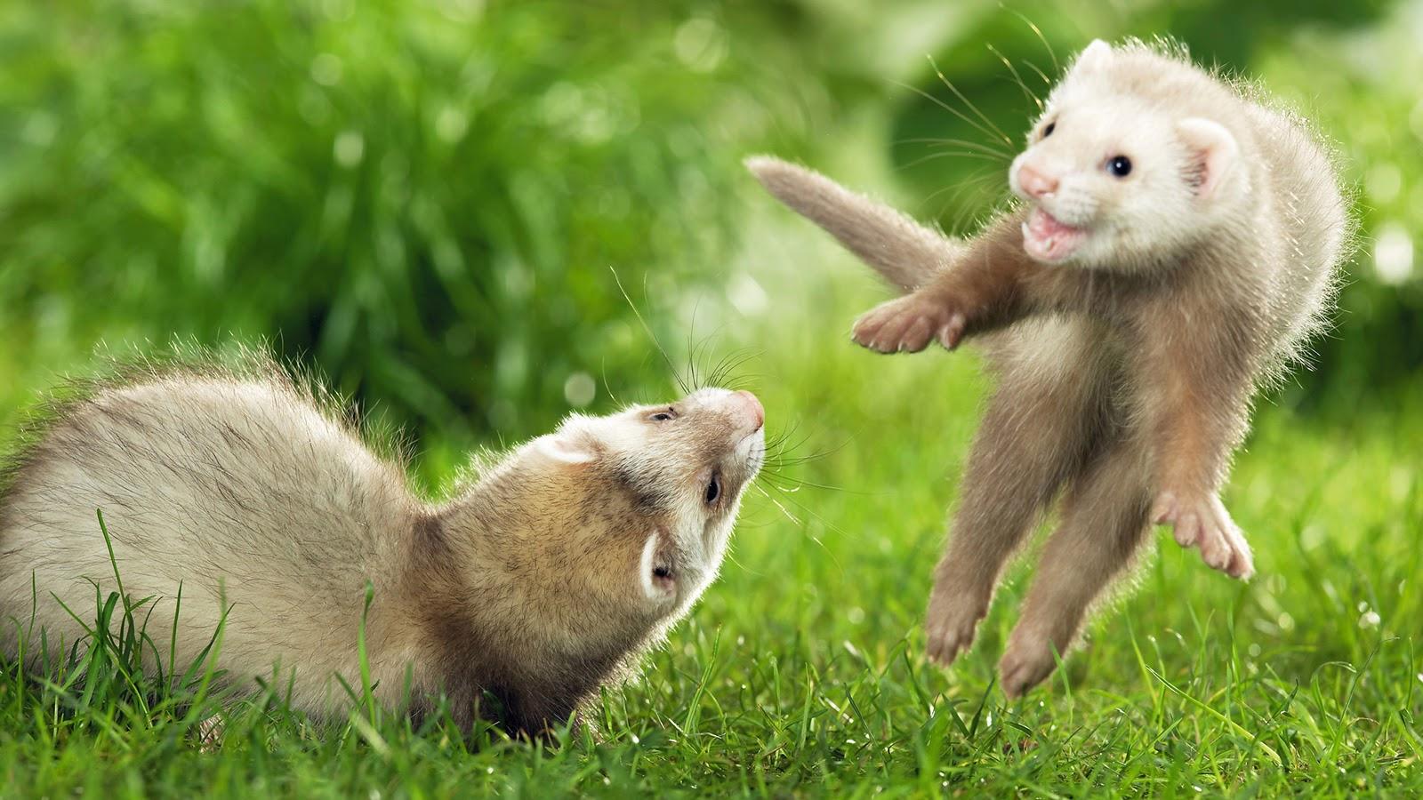 Pets World Cute Animals Hd Photos