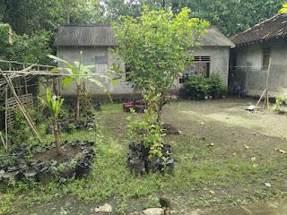 Tanah Dijual Cepat Wates Kulonprogo Yogyakarta Bonus Bangunan 4