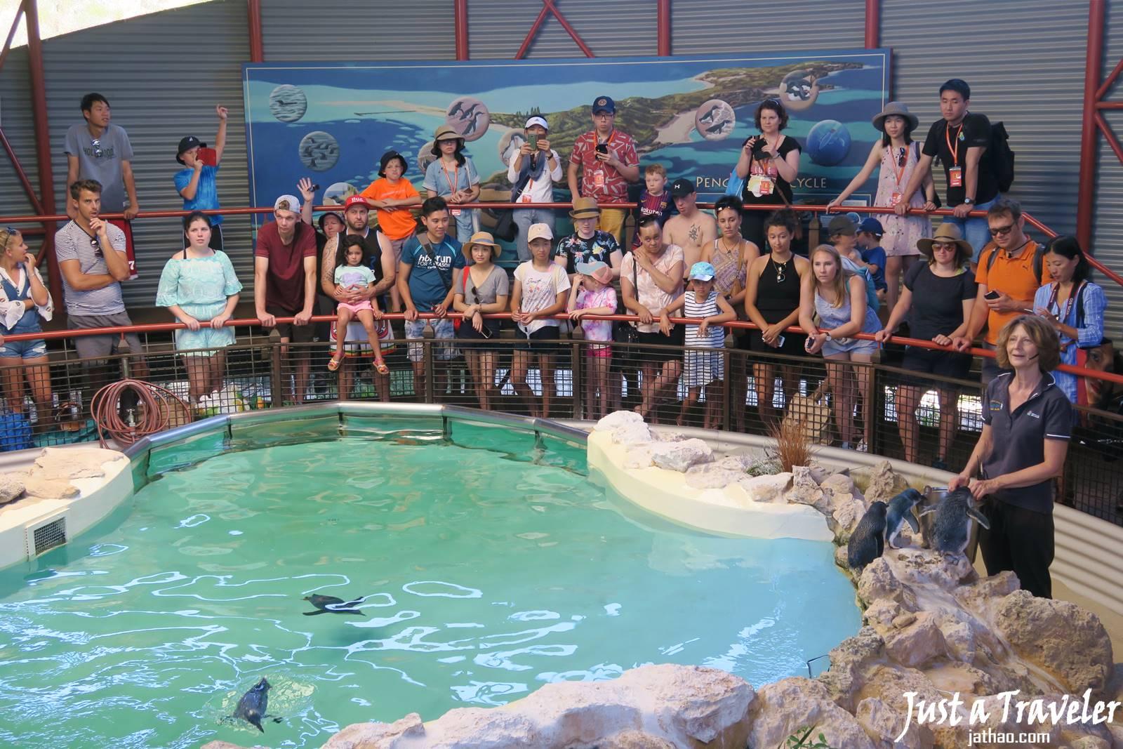 澳洲-伯斯-景點-推薦-企鵝島-Penguin-Island-必玩-必去-自由行-行程-攻略-旅遊-一日遊-二日遊-Perth-Travel-Tourist-Attraction