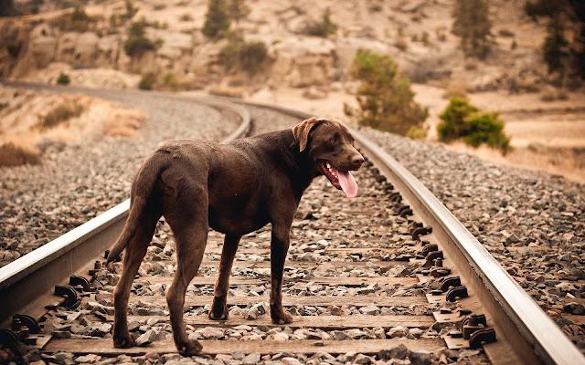 Foto van een hond op het spoor